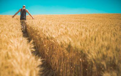 Nawozy organiczne – perfekcyjna opcja?